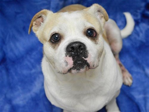 Click for more information about Xena