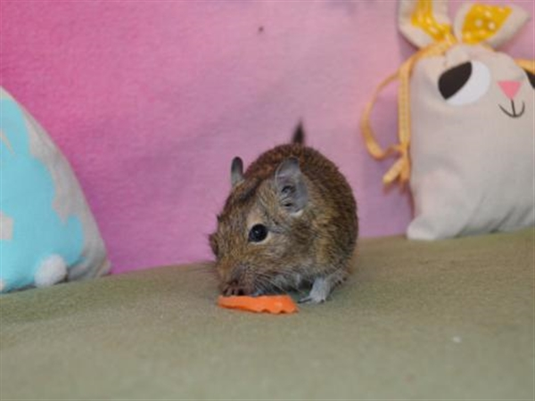 Click for more information about Peanut