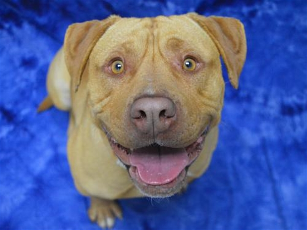 Click for more information about Samson