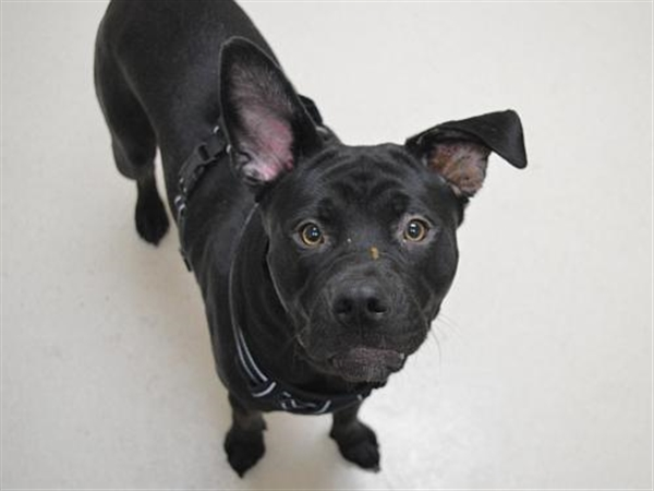 Click for more information about Louie