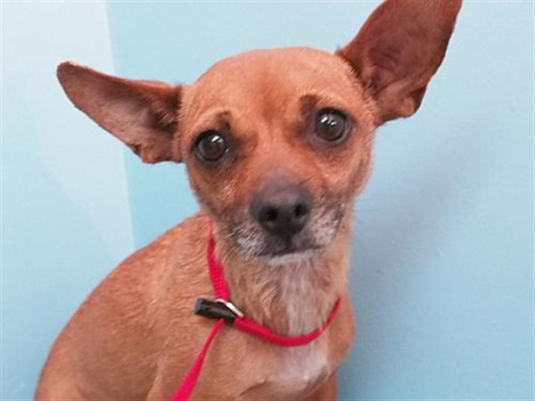 Click for more information about Mindy