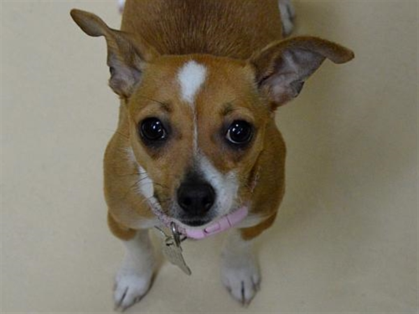 Click for more information about Penny