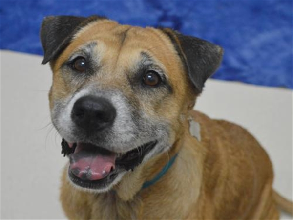 Click for more information about Bailey Girl