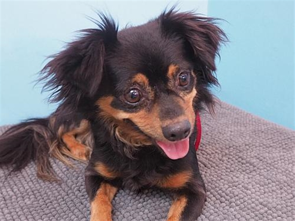 Click for more information about Lexi