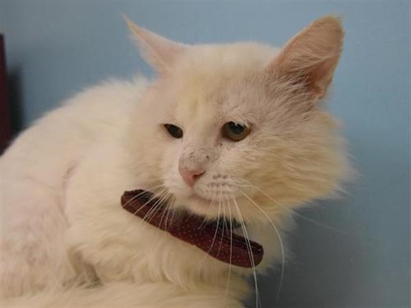 Adopt a Pet | Oregon Humane Society