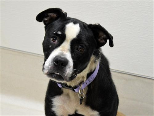 Click for more information about Layla