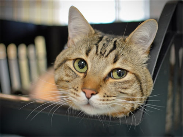 Adopt a Pet | Oregon Humane Society