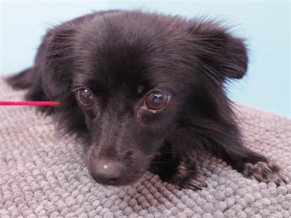 Adopt a Pet   Oregon Humane Society
