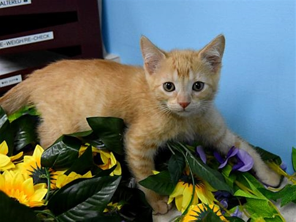 Click for more information about Simba