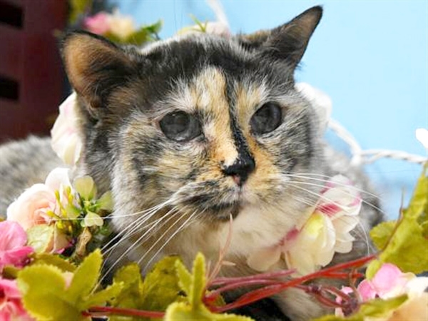 Click for more information about Sweet Pea