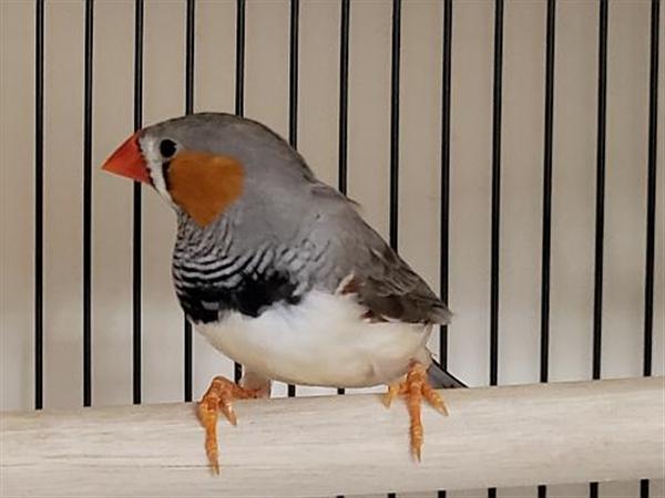 Click for more information about Edbird