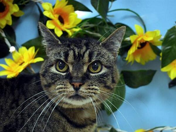 Click for more information about Tigger
