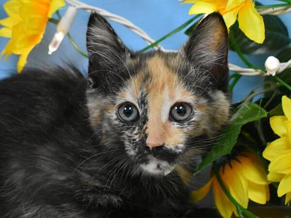 Click for more information about Tabitha