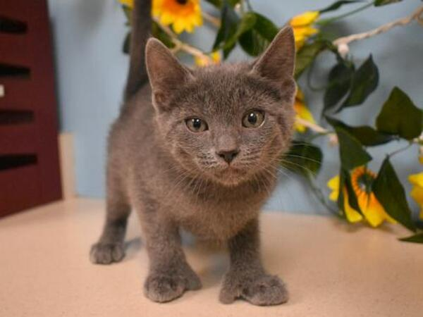 Click for more information about Smokey