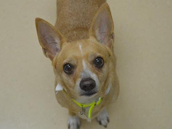 Click for more information about Sweet Tootsie