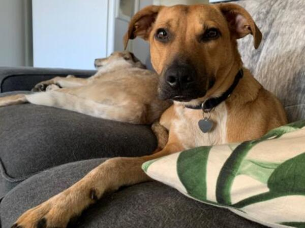 Click for more information about Sienna