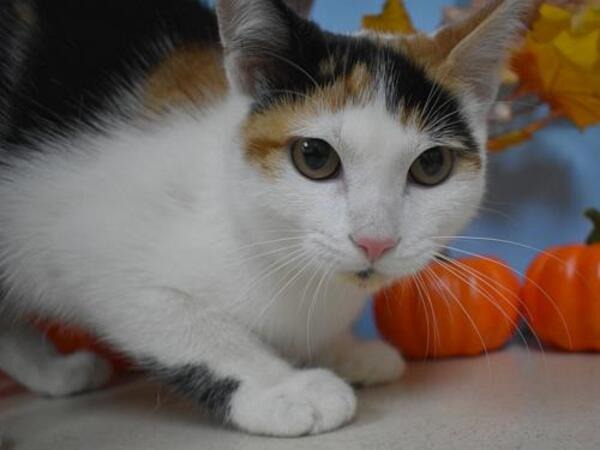 Click for more information about Sookie