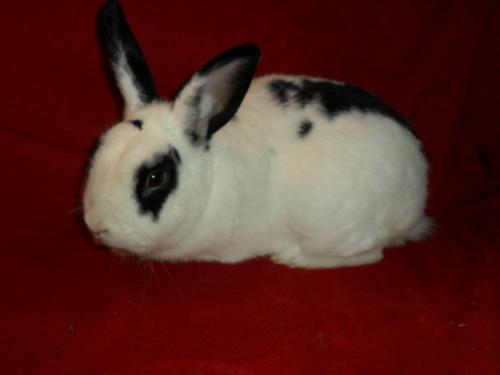Click for more information about Mr. Bunny