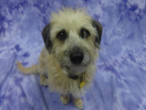 Click for more information about Benji