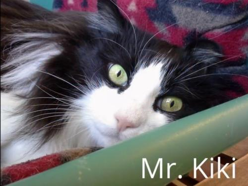 Click for more information about Mr. Kiki