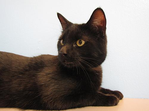 Click for more information about Sheba