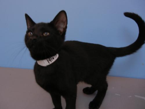Click for more information about Bagheera