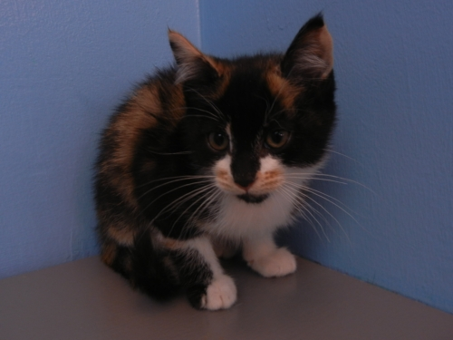Click for more information about Sally