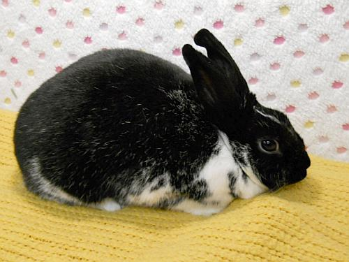Click for more information about Bunbun