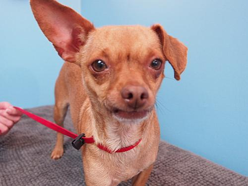 Click for more information about Chloe Aka Fawn