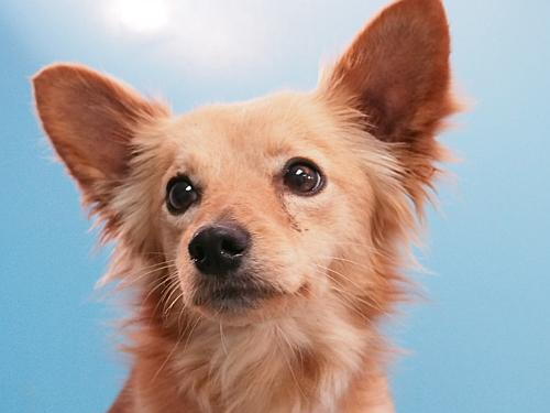 Click for more information about Ziggy