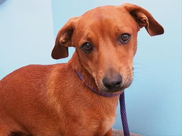 Click for more information about Rusty