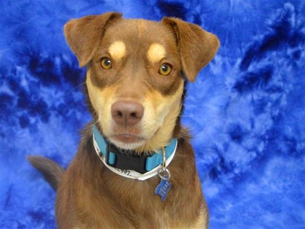 Click for more information about Darla