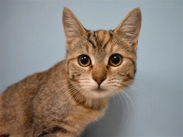 Click for more information about Junipurr