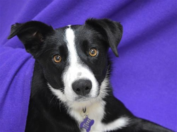 Click for more information about Sadie