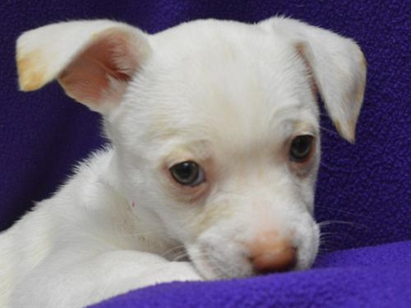 Click for more information about Maisy