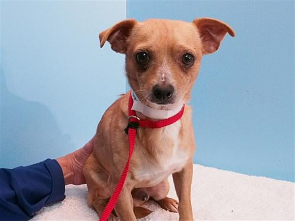 Click for more information about Jim AKA Rufus